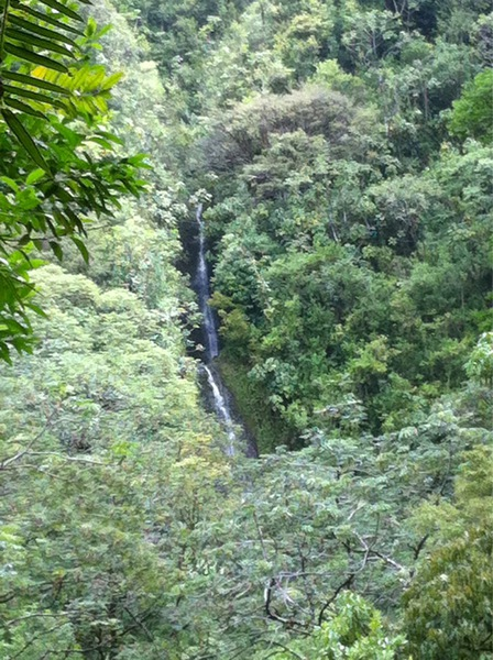 Manoa Falls From A Distance